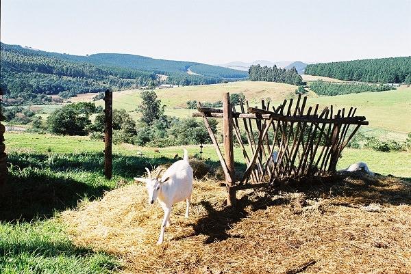 Farm_summer